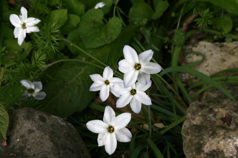 petite_fleurs