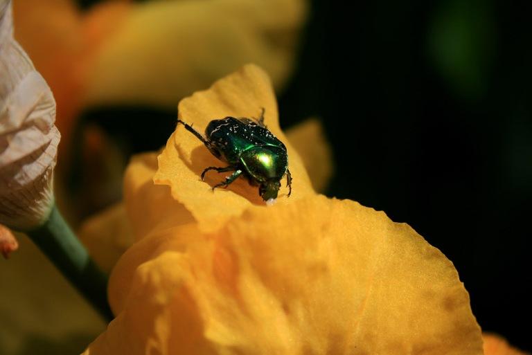 insecte_1024