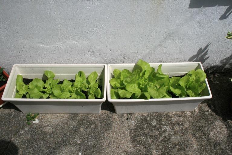 salades01_1024