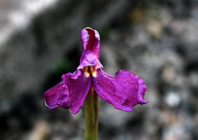 orchidee02_1024
