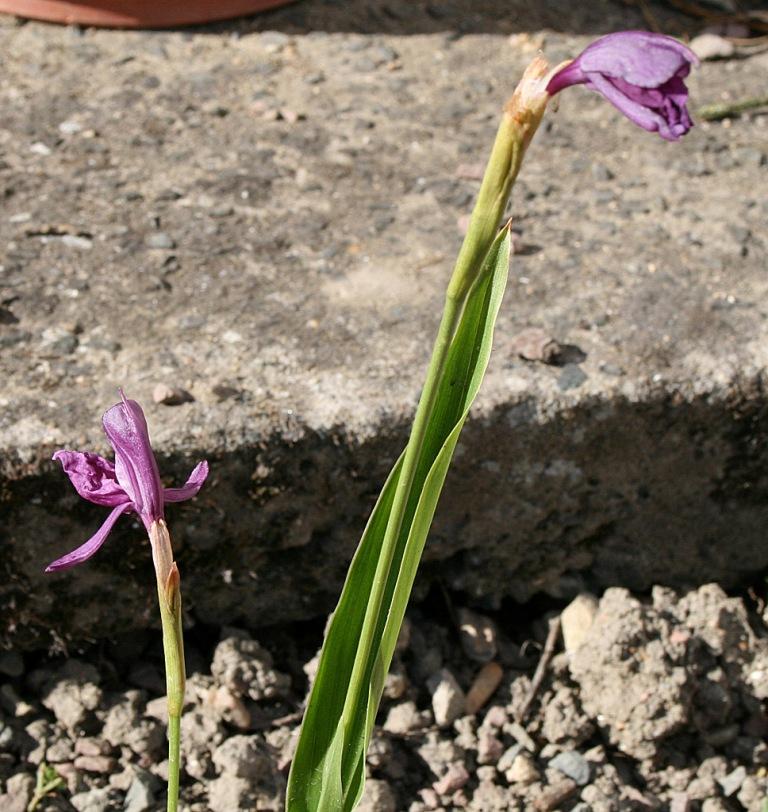 orchidée_jardin_1024
