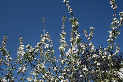 Matin de printemps au jardin ... Loir-et-Cher - Photo Marie-Sophie Bock-Digne