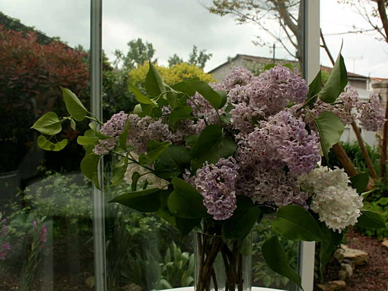 Bouquet de lilas dans la véranda - Photo Marie-Sophie Bock-Digne (Kazamarie) - avril 2015