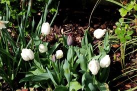 Massif de printemps, Photos Marie-Sophie Bock-Digne