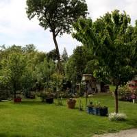 Le jardin d'une amie dans le Marais poitevin